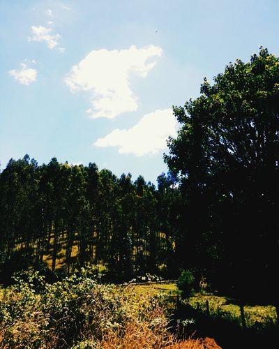 Arboles Arboles , Naturaleza Tree Growth Sky Nature Outdoors No People Landscape Beauty In Nature Dia