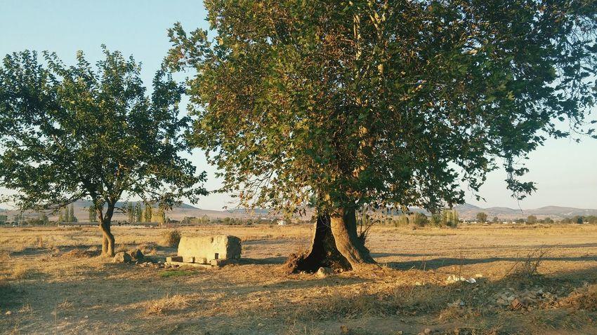 Wood Tree Village