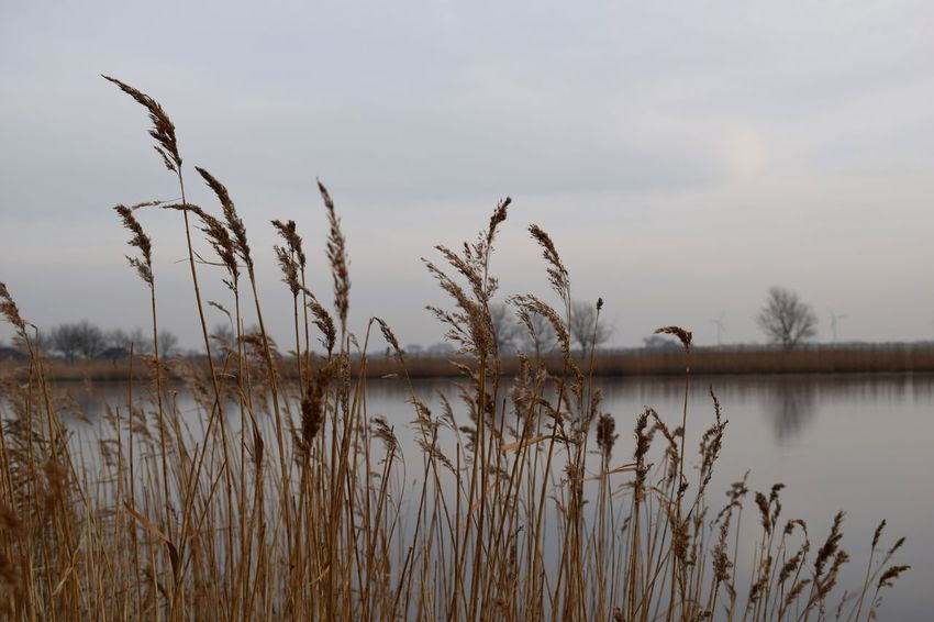 Beauty In Nature Day Grass Lake Landscape Nature No People Outdoors Plant Reed Reed - Grass Family Reeds Scenics Sky Tranquil Scene Water Wetland
