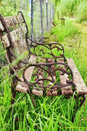 Forest Grass Tree Trunk Growth Tree Green Color WoodLand Nature Plant Tranquility Moss Fallen Tree Tranquil Scene Day Outdoors Scenics Green Non-urban Scene Beauty In Nature South Louisiana Grassy Bench Overgrown Bench With A View