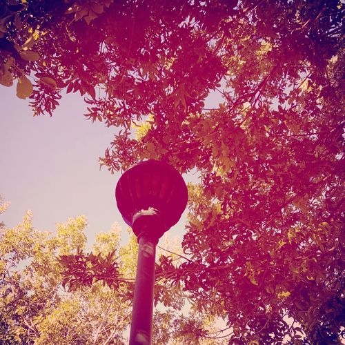 Tree's and light pole Low Angle View Tree Street Light Branch Lighting Equipment Growth Tree Trunk Scenics Sky Directly Below Day Outdoors High Section Nature Tranquility Beauty In Nature Electric Light Tranquil Scene Green Color No People