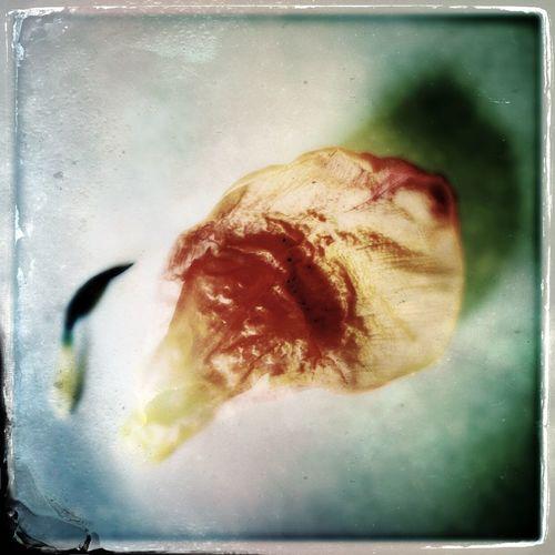 NEM Still Life Tintype Flowerporn #BeautyOfDecay
