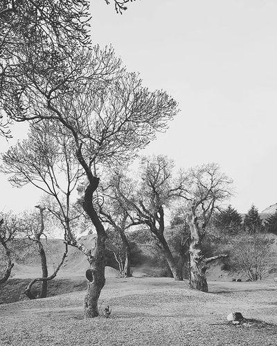 A site visit with my students, landscape design 1 course, department of landscape architecture, Shahid Beheshti University. Faraha. TEHRAN Site Visit Tehran Farahzad Mustseeiran Mustseeiran_insta Tree Landscapearchitecturelife Landscape LandscapeArchitecture