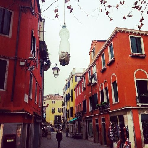 Pastura per Uccellini Venice Italy