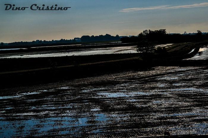 Scenario Riflessi Acqua Piemonte Risaie Acqua Paesaggi Paesaggio Cielo Natura Fotografia Paessaggistica Dino Cristino