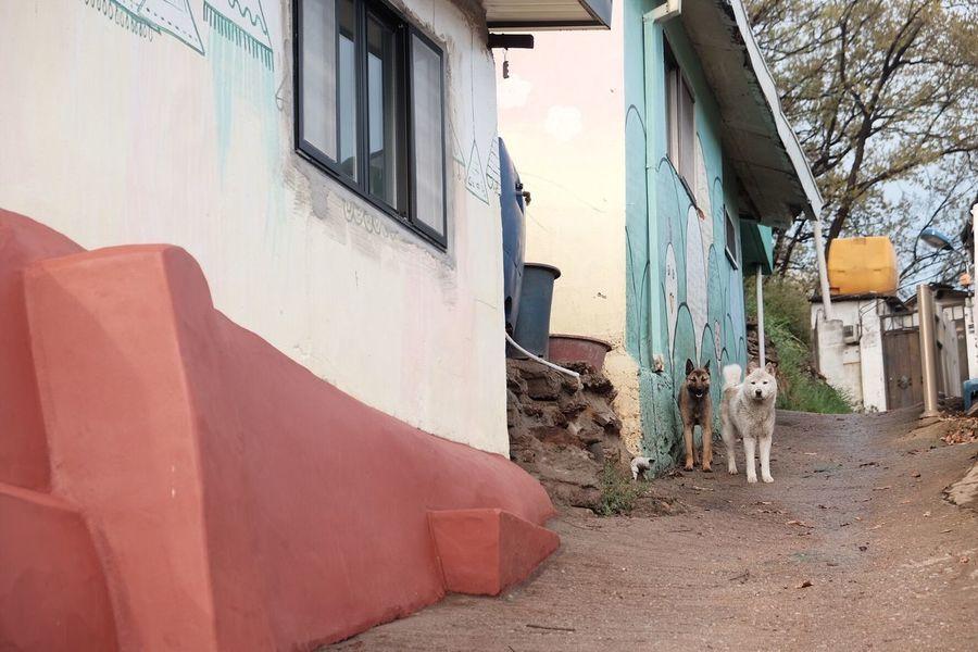 한국 Mammal Outdoors No People Dog South Korea Fujifilm