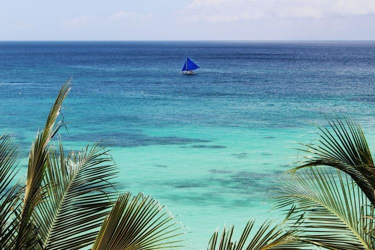 Lonely Sailboat Sailboat Sailing Blue Sails Oceanscape Seascape Blue Planet Paradise Seaside Palm Trees Boracay Philippines Canon Eos Rebel SL1 Peaceful One Boat Boat Backgrounds The Essence Of Summer Colour Of Life Live For The Story The Great Outdoors - 2017 EyeEm Awards