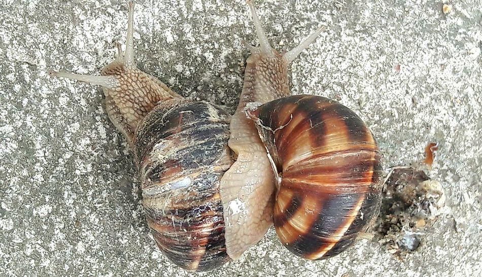 Salyangoz Snail Taking Photos Hayvanlar Nature's Diversities No Filter No Edit Chance Encounters