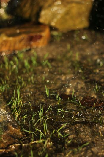 Minimalism PhotographyEyeEm X WhiteWall: LandscapWaterflow Water_collection Water And Stones Forestwalk ForestTaking Photos EyeEm Nature Lover Nature_collection 50mm F1.8 Focus On Foreground From My Point Of View Outdoor Photography Naturelovers Naturearoundus Waterdrops