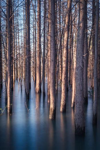 Panoramic shot of trees in water