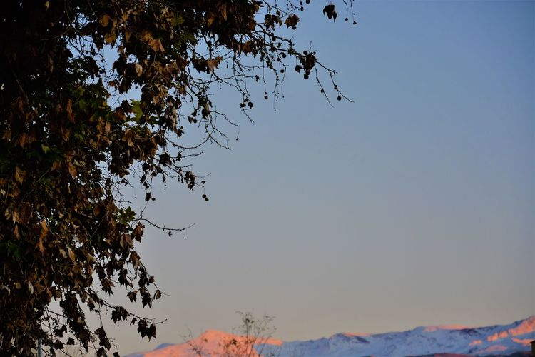 Cityscape Granada SPAIN Beauty In Nature Branch Clear Sky Cold Temperature Day Growth Landscape Low Angle View Mountain Nature No People Orange Color Outdoors Red Color Scenics Sierra Nevada Sky Snow Sunset Tranquility Tree Winter