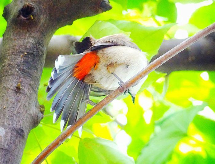 Birds🐦⛅ Check This Out :o:o:o Nature_collection Creative Photography Guess Who? 😄😄😤🙈🙈🙈✌✌✌❤💙❤