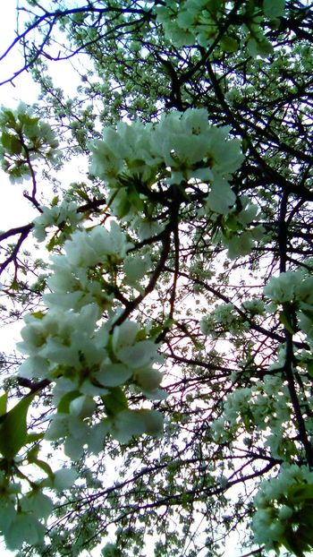 Flower Sky Nature Tree Beauty In Nature Outdoors