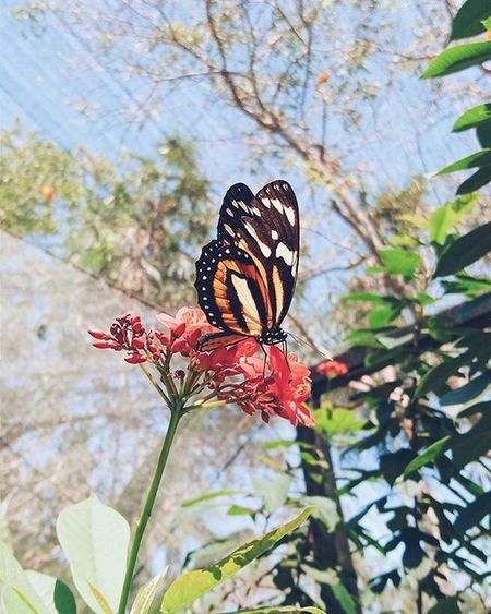 The illusion of freedom. VSCO Vscocam Vscogrid Vscord Nature Butterfly Flowerpower Colors Uncoolrd Thevisualsociety Bestofvsco