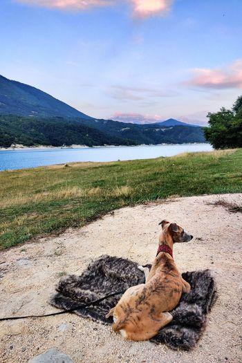 Dog relaxing on land against sky