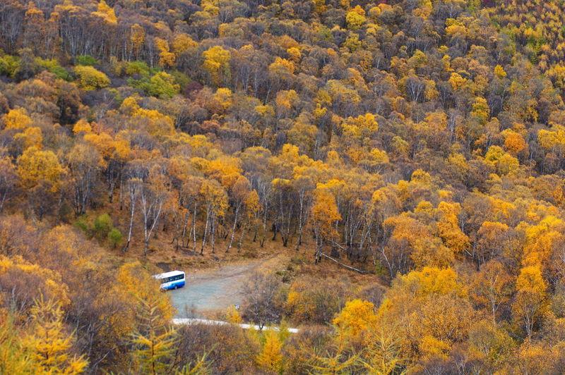 层林尽染 秋林 秋天 High Angle View Nature Beauty In Nature Scenics Outdoors Tranquil Scene Tree Forest No People Pinaceae Agriculture Pine Tree Tranquility Rural Scene Day Aerial View Mountain Plant Landscape Autumn