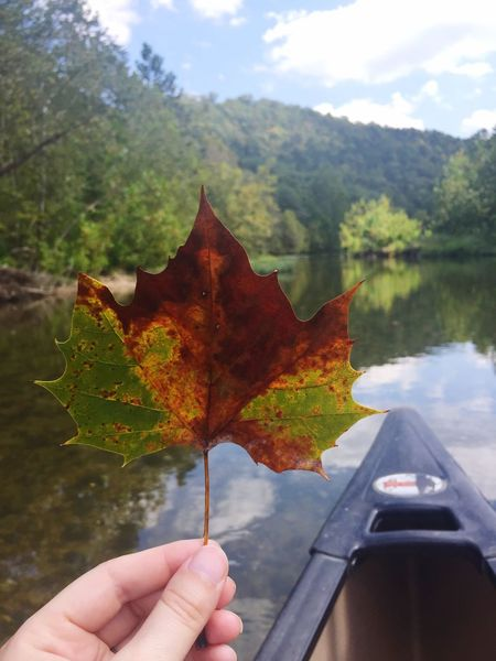 River Leaf Autumn Nature Outdoors Personal Perspective Maple Leaf Close-up EyeEmNewHere EyeEmNewHere EyeEm Ready