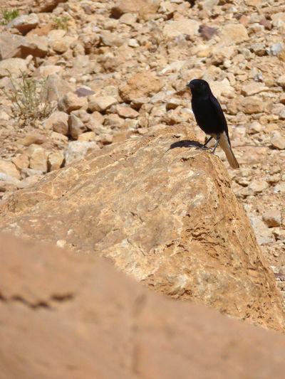 Bird perching on ground