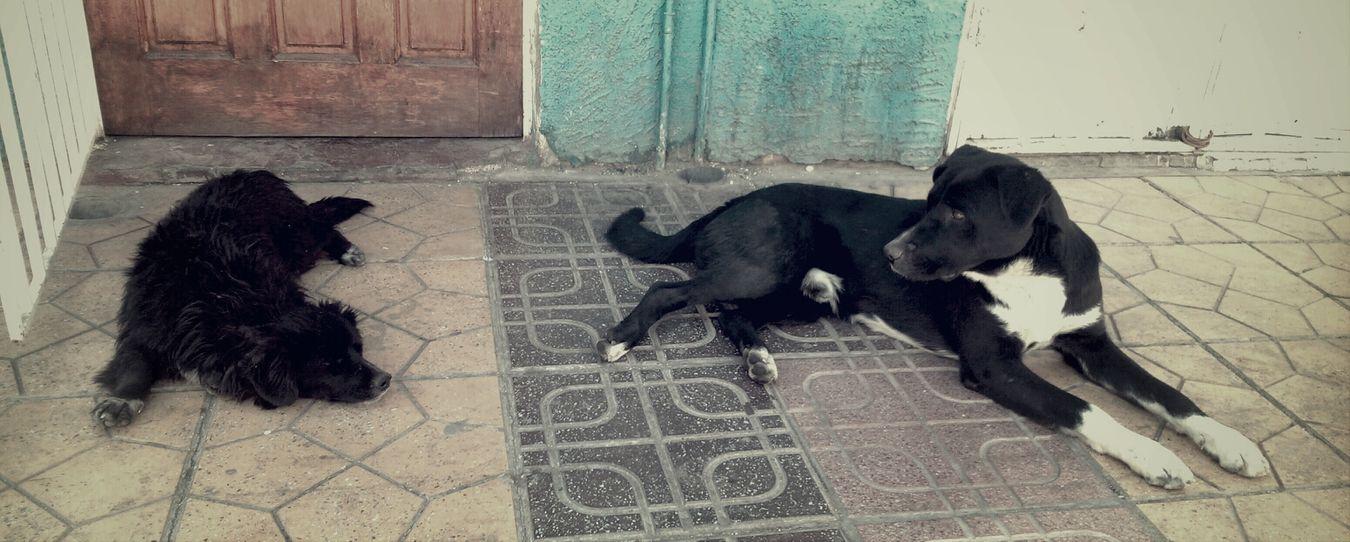 Perros De La Calle Amores Perros Perro :( ellos son nuestra responsabilidad
