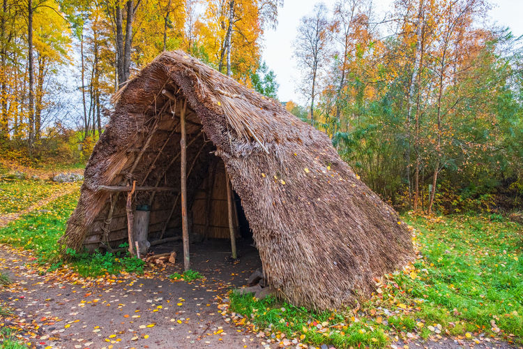 Log cabin by tree in forest during autumn