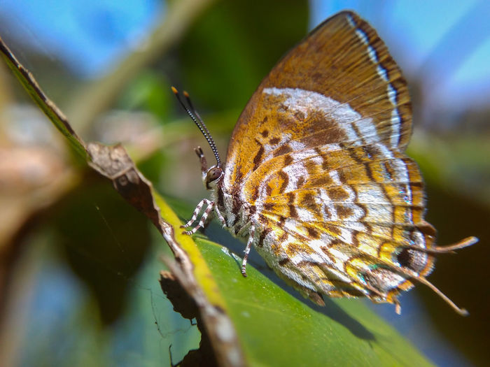 Butterfly Insect Macro Mobilephotography Macro_collection Macro Beauty Insect Butterfly - Insect Close-up One Animal Animals In The Wild Animal Wildlife No People Animal Themes Nature Plant Leaf Tranquility Beauty In Nature Fragility Outdoors Royal Person Day