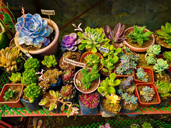 High angle view of flowering plants in market