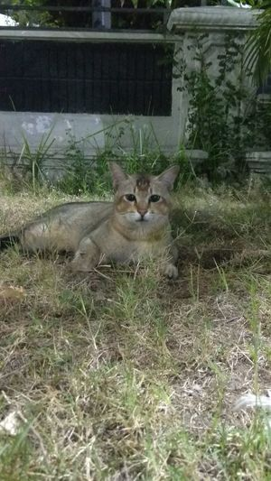 Cat relaxing in grass