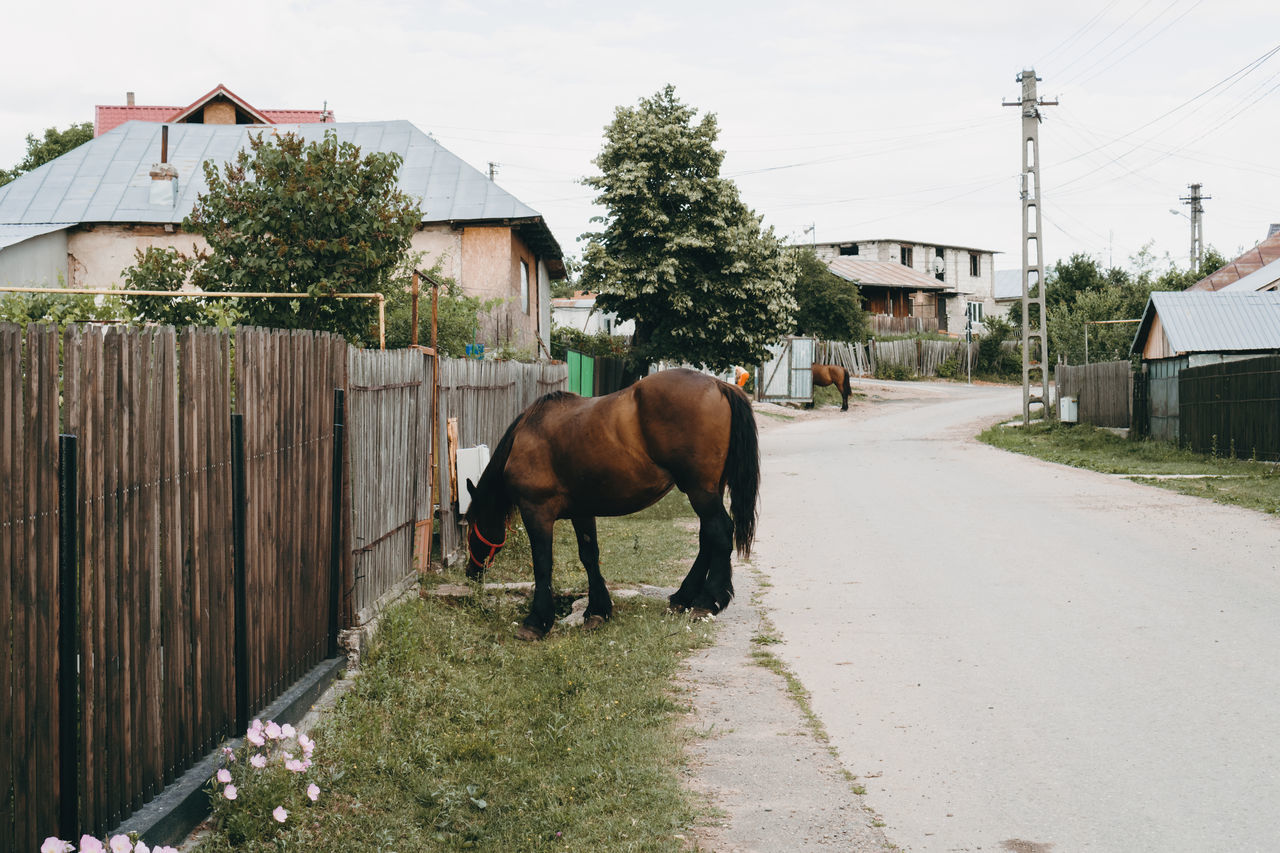 HORSE STANDING ON ROAD BY HOUSE