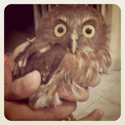 We saw an owl at our isolation ward!!