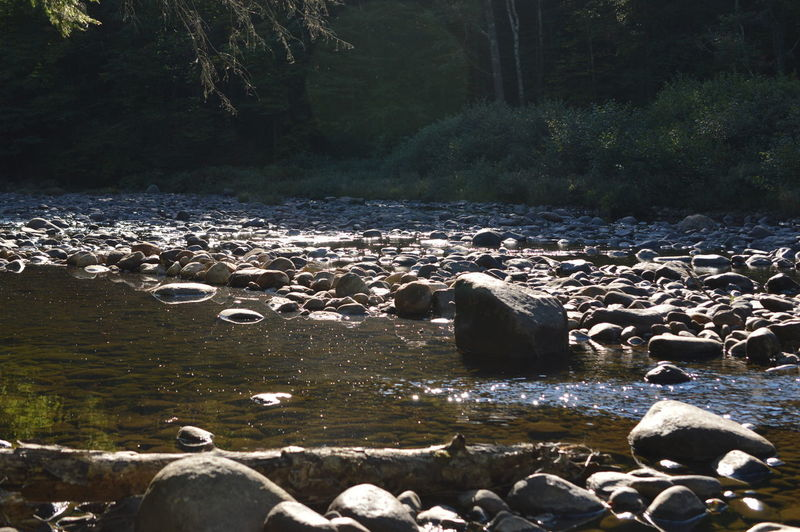 Scenic view of river in forest