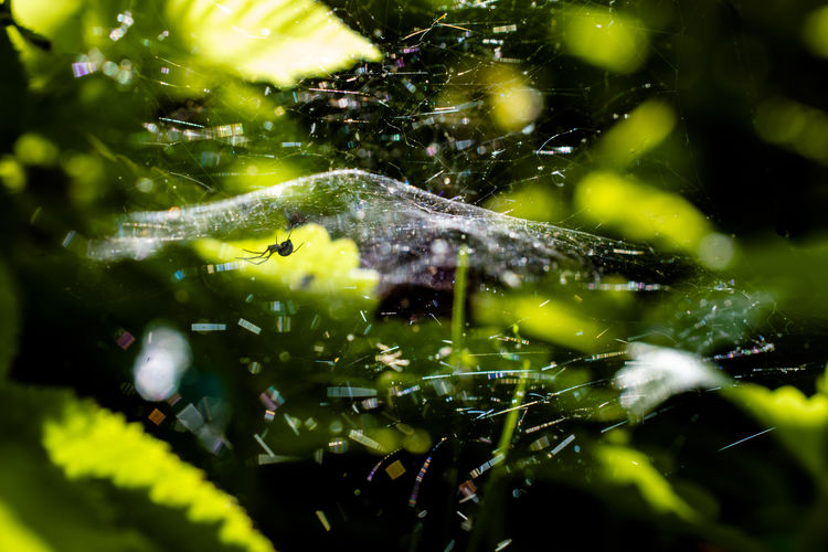 Close-up Selective Focus Water Plant Animal Animals In The Wild Animal Wildlife Green Color Fragility Nature Animal Themes Day Spider Web Growth No People Invertebrate Spider Plant Part Insect Outdoors Web