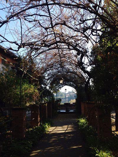 Garden Autumn Flowes Rome