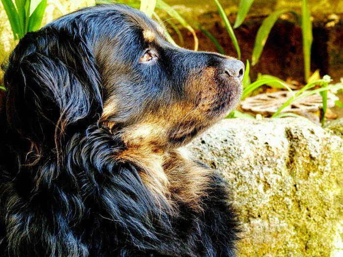 Pets Corner Dog