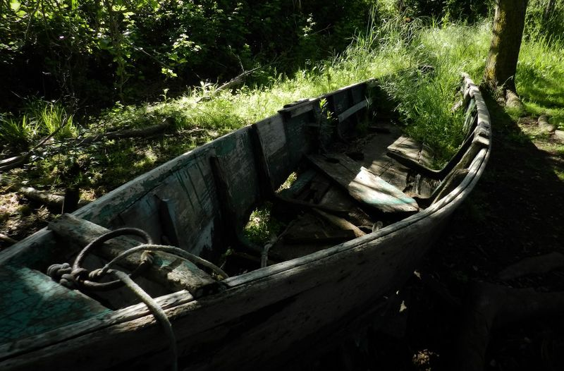 Abandoned Nature Photography Photography Abandoned Nautical Vessel Gondola - Traditional Boat Water Boat Run-down Abandoned Obsolete Deterioration Water Vehicle Discarded Ruined Damaged Sailing Boat Water Wheel Growing
