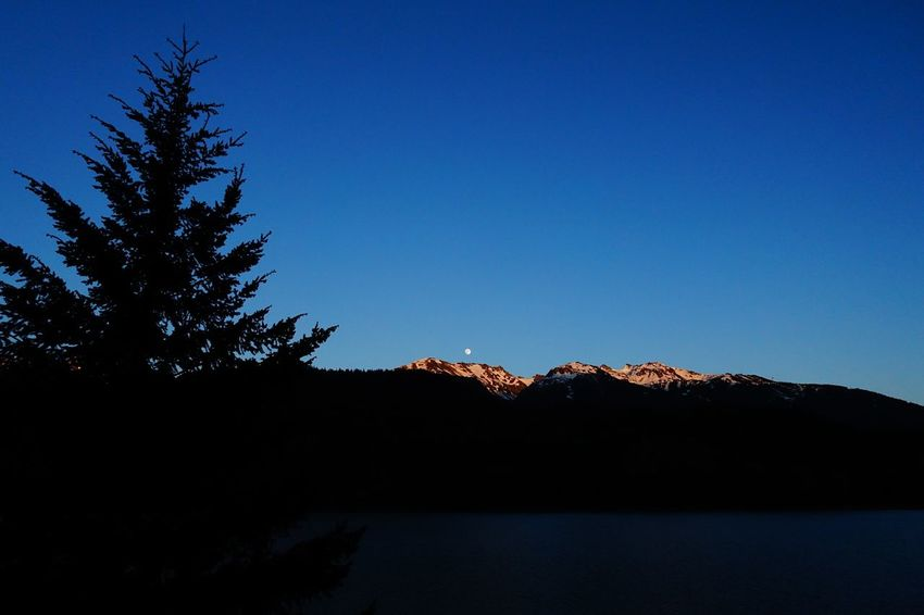 the small moon Whistler Canada Road Tripping Exploring Abventure Travel Senset Fullmoon Sky Tree Nature Mountain