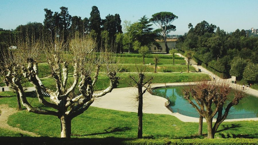 Shapes of trees Volumes And Shapes Branches And Trucks Tree Shapes Cut Trees Pond Landscape Architecture Manmade Landscape Lawn Tree Water Sky Green Color Landscape