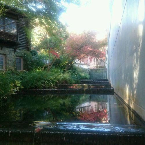 秋深まってます🍁 Water Reflection Architecture Tree Window Day Building Exterior Built Structure No People Growth Outdoors Nature Sky