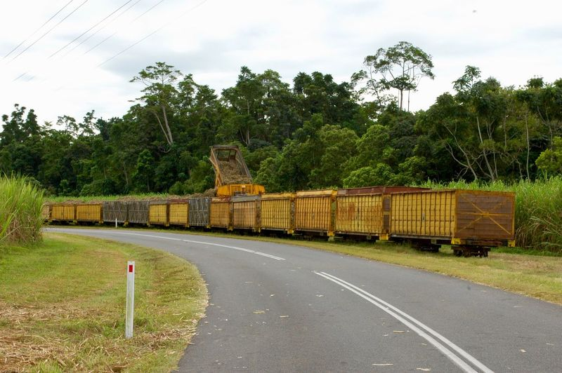 Agricultural Horizontal Nature Photography Queensland Rural Road Cane Sugarcane Harvest Cane Train Plant Tree Road Transportation Sky Cloud - Sky Nature No People Green Color Growth