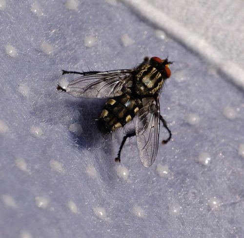 Invertebrate Insect Animal Themes One Animal Animal Wildlife Animal Animals In The Wild Housefly Fly Close-up Nature Outdoors