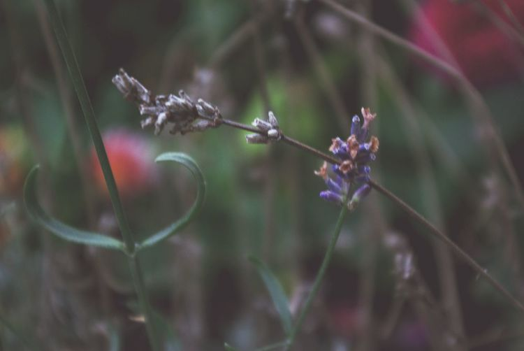 Showing Imperfection Beauty In Nature Close-up Day Flower Fragility Grass Growth Imperfection Keep It Blurry Nature No People Outdoors Plant