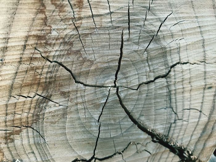 Lifetimes. Cracked Textured  Tree Ring Wood - Material Tree Stump Backgrounds Timber Pattern Close-up Wood Grain Full Frame Cross Section Nature Brown Tree No People