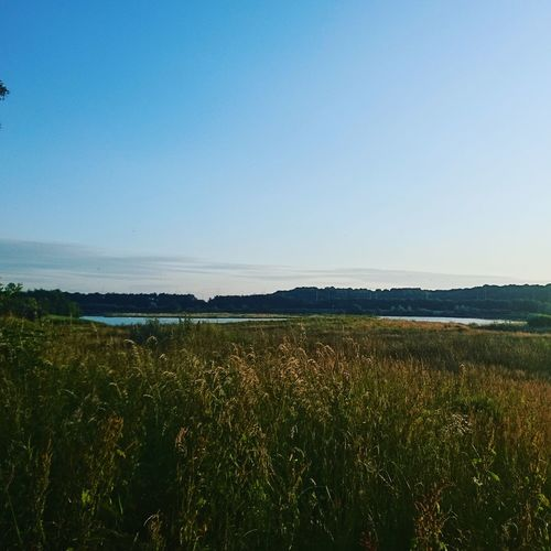 Nature Reserve Wetlands Lake Blue Sky Nature Space Countryside Nature Reserve Flower Clear Sky Water Tree Rural Scene Blue Flowerbed Flower Head Wildflower Uncultivated Plant Life Flowering Plant