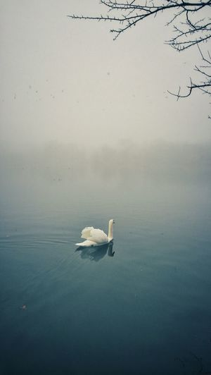 Atmosphere Bird Distant Fog Horizon Lake Landscape Majestic Nature Nature Outdoors Peaceful Prospect Park Reflection Relaxing Moments Remote Swans Tranquil Scene Tranquility Tree Water Waterscape