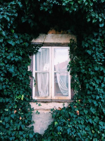 ☘ Alentejo Portugal Portugaldenorteasul Portugal_em_fotos Portugaloteuolhar Portugal_lovers Portugalcomefeitos Window Windowporn Nature Nature_collection Nature Photography Naturelovers Old Old Buildings Old House