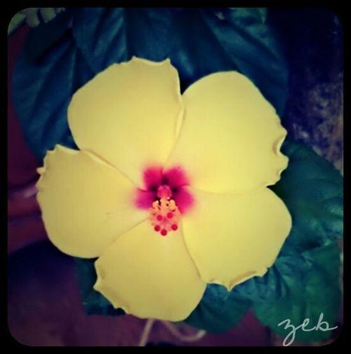 Fleurs Flowers Flower Collection EyeEm Flower Fleur Jaune Yellow Flower