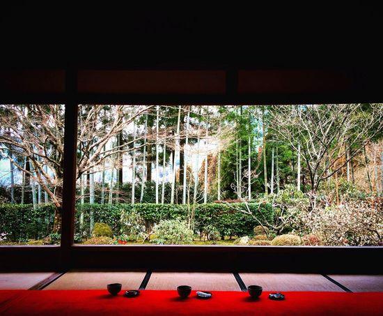 宝泉院 大原 庭園 京都 Kyoto 寺社仏閣 額縁庭園