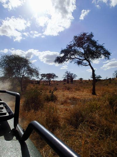 Tanzania Tansania Tarangire National Park Tanzanianationalparks Tarangire Africa Afrika EyeEmNewHere Safari Olympus TG-2