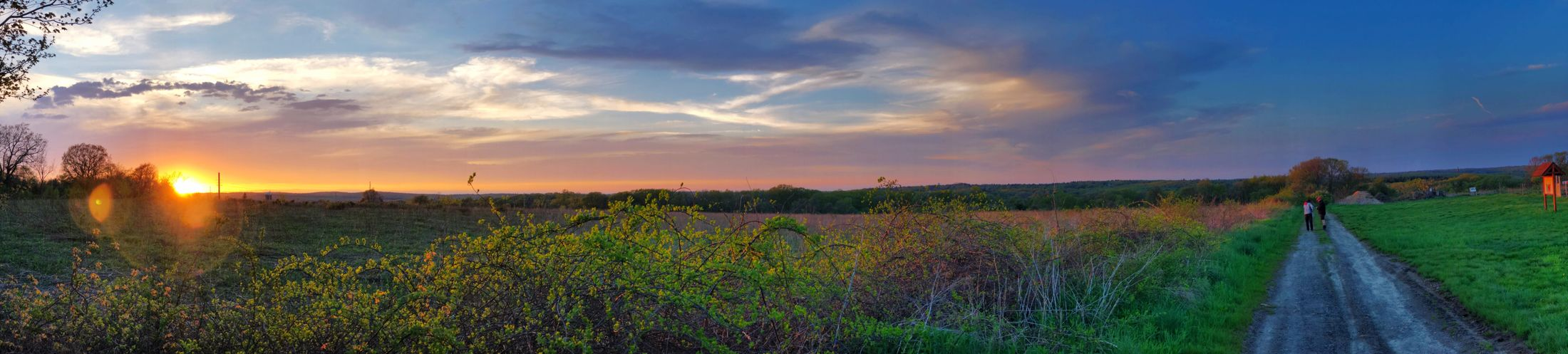 Panoramic View of a Sunset, on a Country Road Sky Plant Cloud - Sky Beauty In Nature Growth Landscape Land Field Scenics - Nature Tranquility Tranquil Scene Nature Agriculture Environment Sunset Road Panoramic