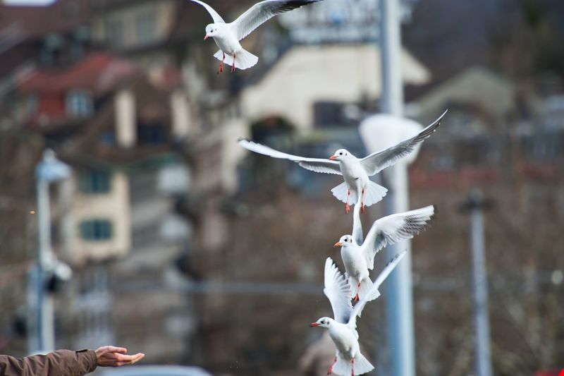 Seagulls In Flight Against Blurred Background