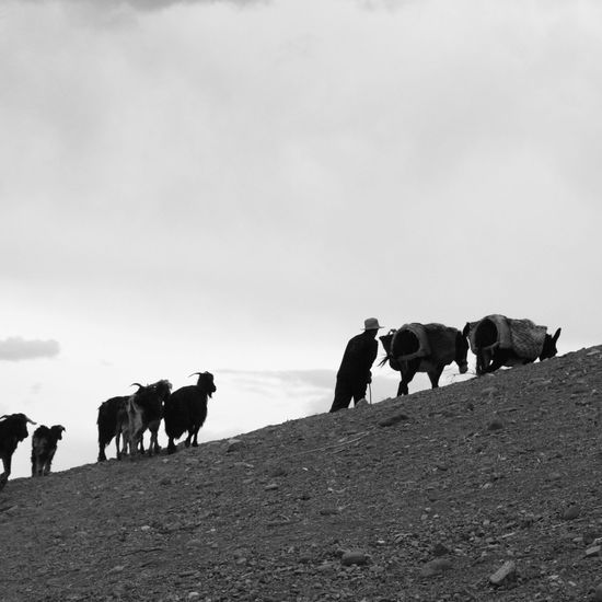 Animal Landscape Sky Goats Herd Sheperd Morocco Blackandwhite Noir&blanc EyeEmNewHere